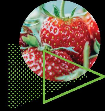 stawberries_150